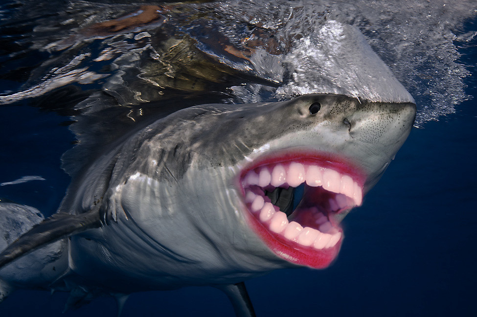 Shark Night 3D 2011  IMDb